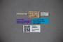 3048250 Stenus pauloensis ST labels IN