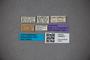 3048251 Stenus parcipennis ST labels IN