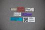 3048255 Stenus perbrevis ST labels IN