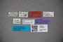 3048257 Stenus fossicollis ST labels IN