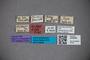3048260 Stenus petrii HT labels2 IN