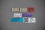3048262 Stenus latus ST labels2 IN