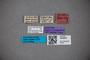 30482562 Stenus latus ST labels IN