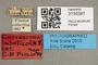 3130391 Haematopota monticola T labels IN