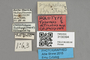 3130394 Tabanus alticolus HT labels IN
