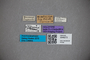 3048272 Stenus quadratipennis HT labels IN