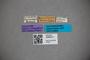 3048273 Stenus quadrispinus HT labels IN