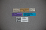 3048275 Stenus regalis ST labels IN