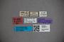 3048277 Stenus reticulatus ST labels2 IN