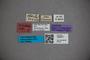 3048277 Stenus reticulatus ST labels IN