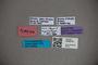 3048279 Stenus ripicursor HT labels2 IN