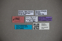 3048279 Stenus ripicursor HT labels IN