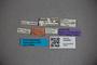 3048282 Stenus ruandae ST labels IN