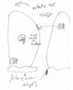 FMNHINS3168453_specimen-map