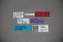 3048285 Stenus sagittipenis HT labels2 IN