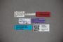 3048285 Stenus sagittipenis HT labels IN