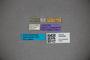 3048289 Stenus sanctaecatharinae ST labels IN