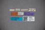 3048293 Stenus sauterianus HT labels IN