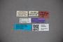 3048294 Stenus schmidti ST labels2 IN