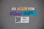 3048304 Stenus semimarginatus HT labels IN