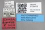 3130413 Evaza discalis HT labels IN