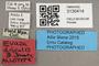 3130414 Evaza discalis AT labels IN