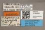 3130424 Trichophthalma inexpectata PT labels IN