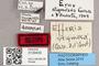 3130430 Efferia stigmosa HT labels IN