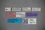 3048307 Stenus sericeovillosus ST labels IN