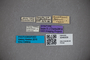 3048309 Stenus silvicola ST labels2 IN
