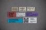 3048317 Stenus sodalis ST labels2 IN