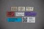 3048317 Stenus sodalis ST labels IN