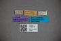 3048318 Stenus sondaicus ST labels IN