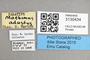 3130434 Machimus adustus PT labels IN