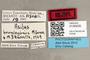 3130435 Machimus bromleyanus HT labels IN