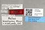 3130436 Machimus bromleyanus AT labels IN