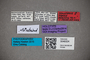 3048324 Stenus steineri HT labels IN