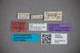3048325 Stenus stigmatipennis ST labels2 IN