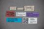 3048325 Stenus stigmatipennis ST labels IN