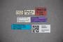 3048327 Stenus strandi ST labels2 IN