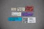 3048327 Stenus strandi ST labels IN