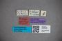 3048328 Stenus strigicollis HT labels IN