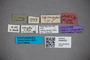 3048329 Stenus subconcentus HT labels2 IN