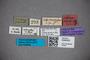 3048329 Stenus subconcentus HT labels IN