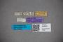 3048331 Stenus subcoeruleus HT labels IN