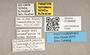 3130455 Apiocera bibula PT labels IN