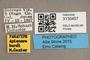 3130457 Apiocera hurdi PT labels IN