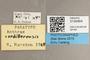 3130464 Anthrax cordillerenisis PT labels IN