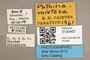 3130467 Phthiria mixteca PT labels IN