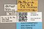 3130470 Phthiria toltec PT labels IN